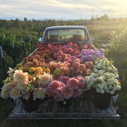 Целая машина цветов