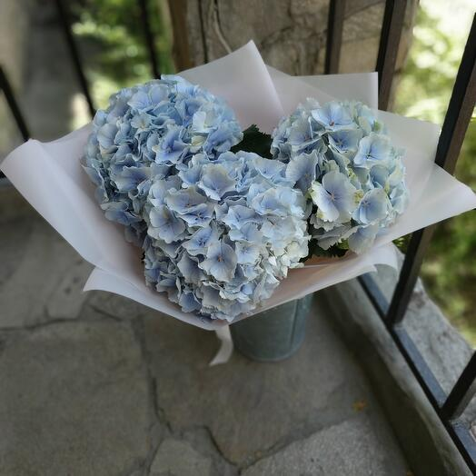 Mono-bouquet of hydrangeas