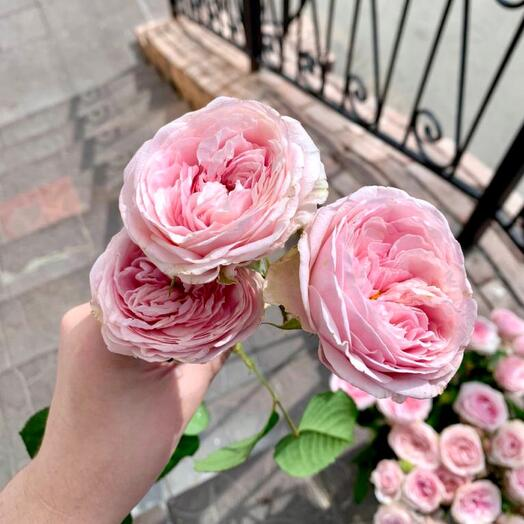 Эксклюзивная кустовая Vip-Роза