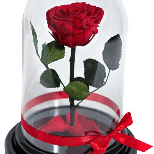 Роза красная в колбе