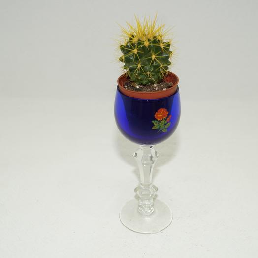 Эхинокактус: букеты цветов на заказ Flowwow