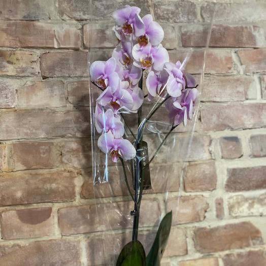 Орхидея 1