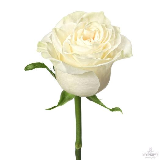 Белая роза 60 см