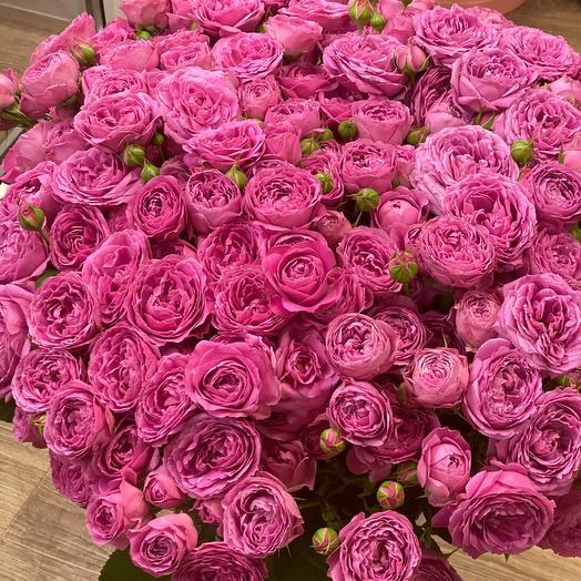 51 Роза- пион