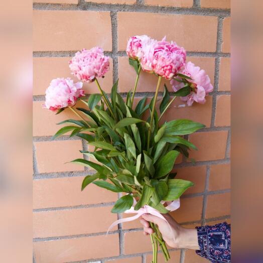 5 розовых французских пионов