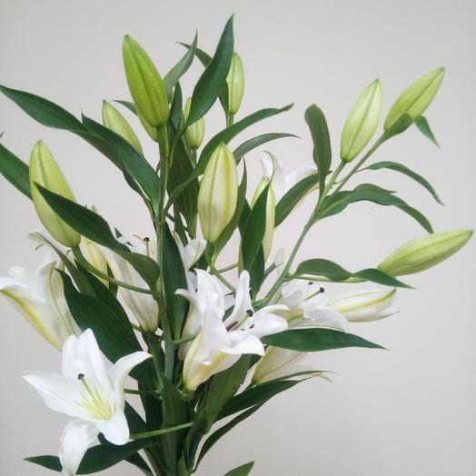 Белоснежные лилии: букеты цветов на заказ Flowwow
