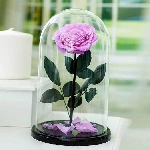 Нежно-розовая вечная роза