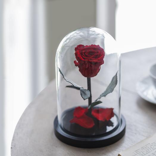 Роза в колбе Mini красная: букеты цветов на заказ Flowwow