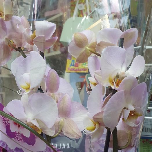 Орхидея 2ствола: букеты цветов на заказ Flowwow