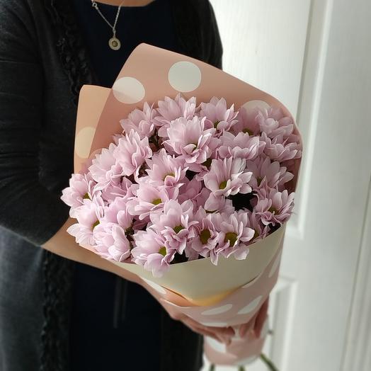 Розовое облачко ромашек🌸 хризантемы кустовые розовые