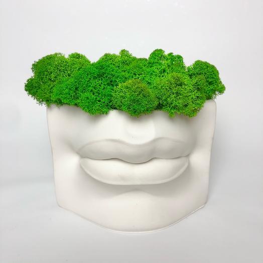 Кашпо губы и мох