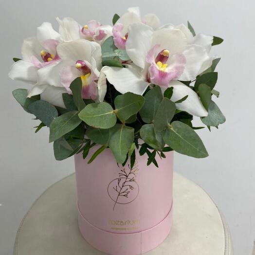 Орхидеи в коробке М