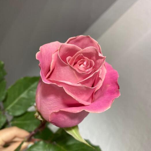 Роза одноголовая эквадор