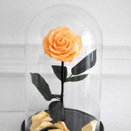 RICH PEACH ПЕРСИКОВАЯ РОЗА В КОЛБЕ KING SIZE: букеты цветов на заказ Flowwow