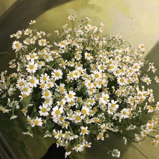 Настоящие ромашки по супер цене: букеты цветов на заказ Flowwow