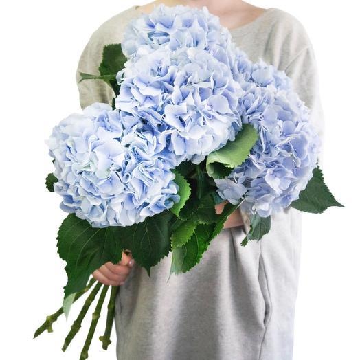 """Гортензия голубая: букеты цветов на заказ Flowwow"