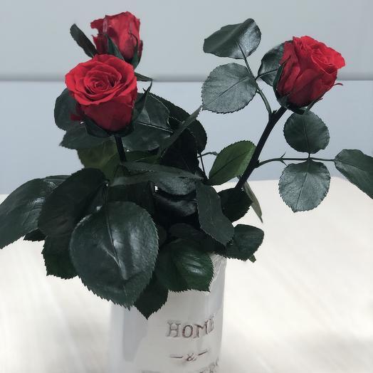 Розы стабилизированные красного цвета