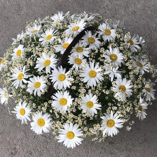 Огромная корзинка с ромашками: букеты цветов на заказ Flowwow