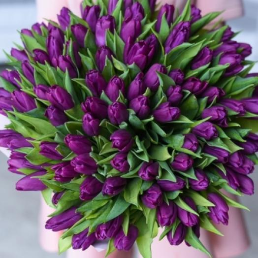 101 purple tulips
