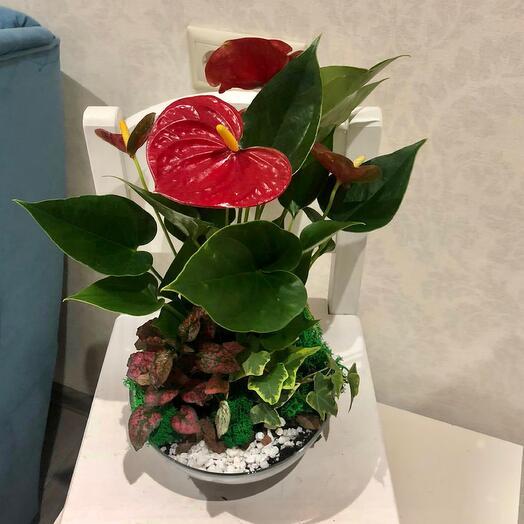 Тропический флорариум