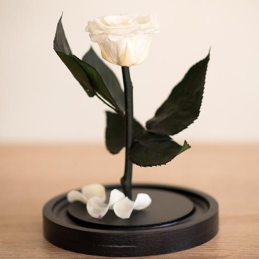 Белая роза в колбе Мини: букеты цветов на заказ Flowwow