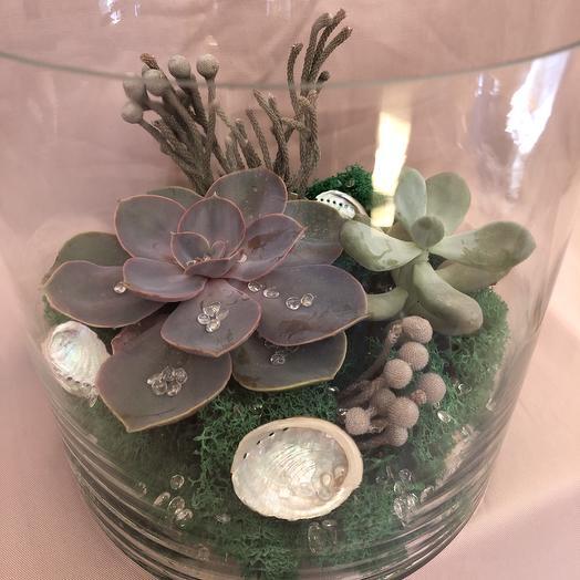 Флорариум с суккулентами «Морской»: букеты цветов на заказ Flowwow