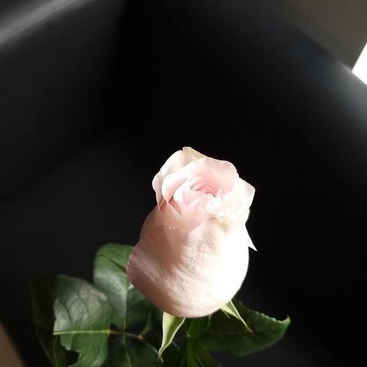 Роза эквадорская роза 80см