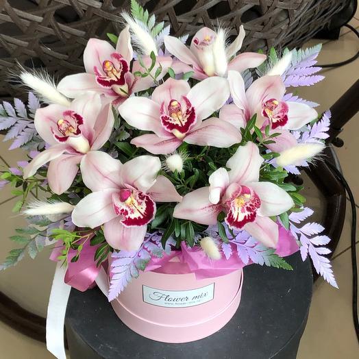 Изысканные орхидеи