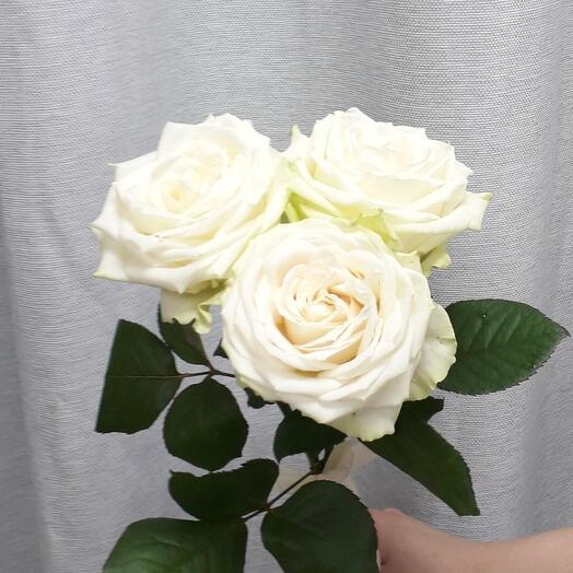 3 белых розы