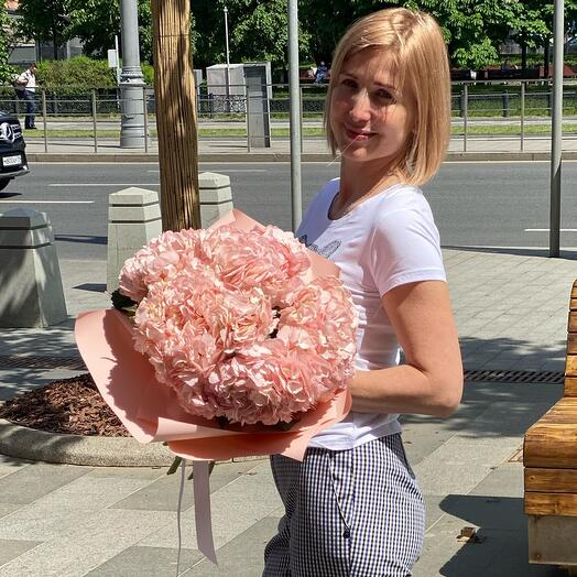Розовая пудра гортензия