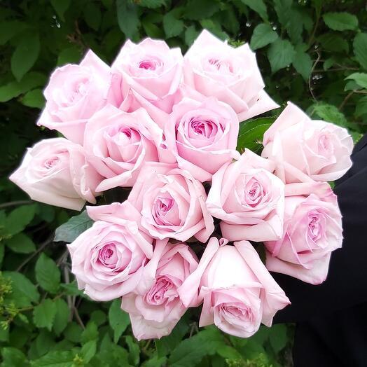 Роза Pink OHARA 60см-13шт