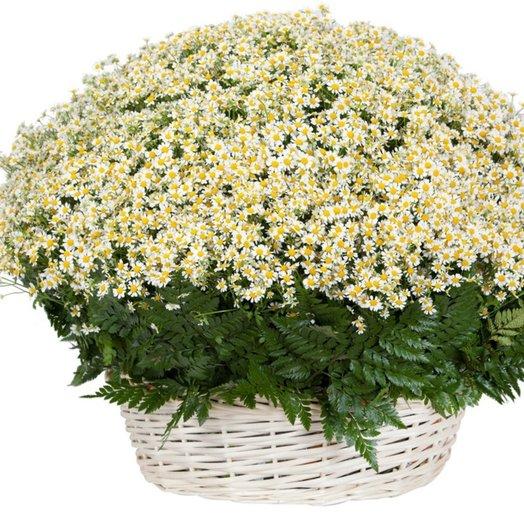301 Ромашка в корзине: букеты цветов на заказ Flowwow