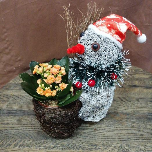 """Каланхое в кашпо из натуральных материалов """"снеговик"""": букеты цветов на заказ Flowwow"""