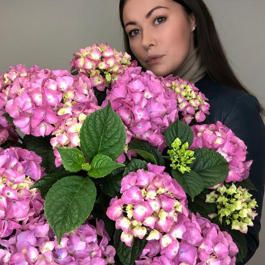 Гортензия в кашпо: букеты цветов на заказ Flowwow