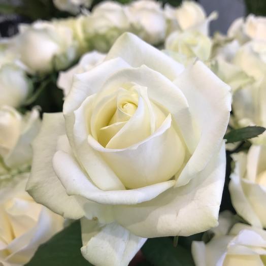 Роза белая  50-60см, 1 шт