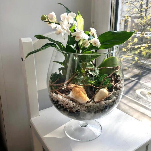 Тропический флорариум с орхидеями