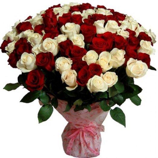 101 червоно-біла троянда