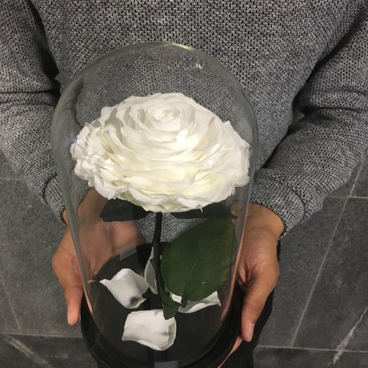 Белая King роза: букеты цветов на заказ Flowwow