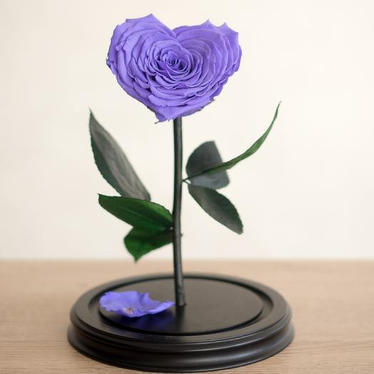 Роза в колбе Премиум сиреневая: букеты цветов на заказ Flowwow