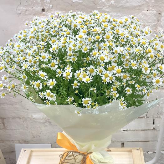 Bouquet of the Chamomile field