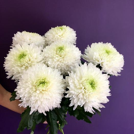 Букет белых хризантем Магнум: букеты цветов на заказ Flowwow