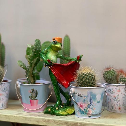 Кактус в ведёрке: букеты цветов на заказ Flowwow