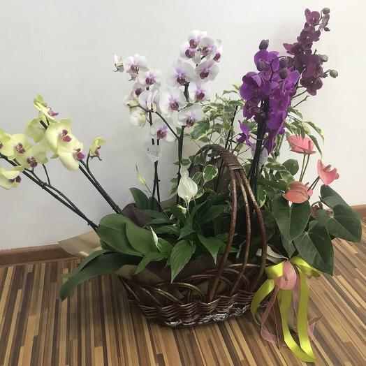 Корзина изобилия: букеты цветов на заказ Flowwow