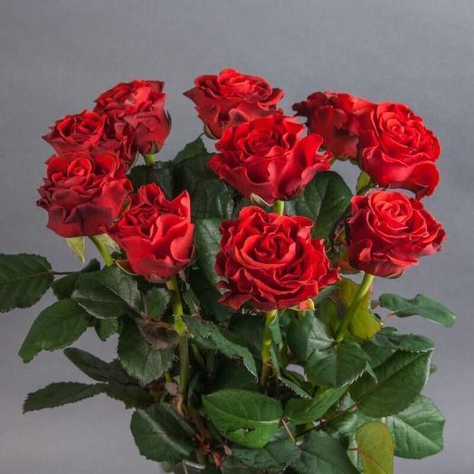 Роза Эльторо