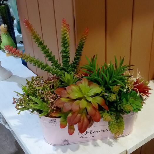 Суккуленты Flowers
