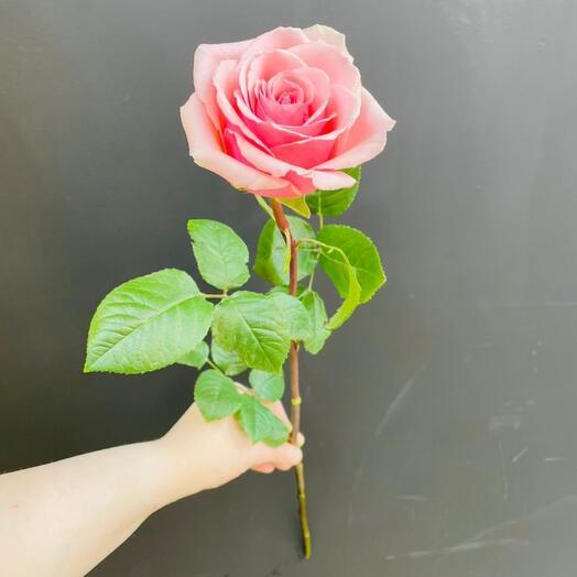 Роза Geraldina  Эквадор 70 см