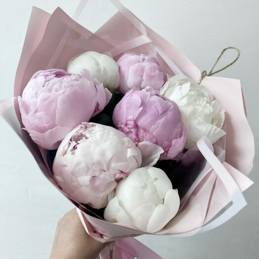 7 peonies France white and pale pink