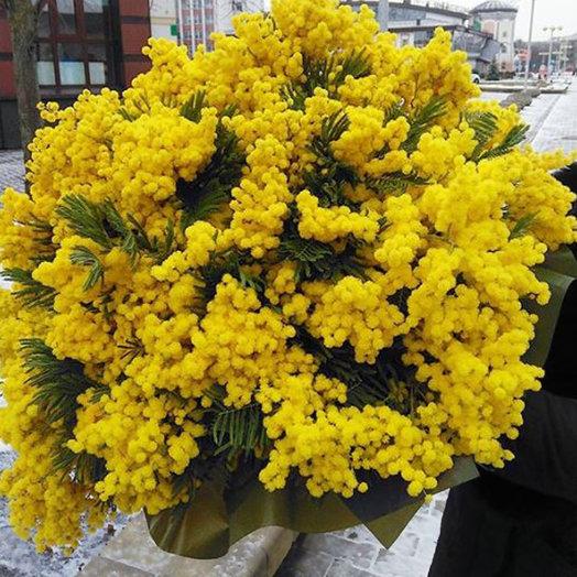 Охапка мимозы: букеты цветов на заказ Flowwow