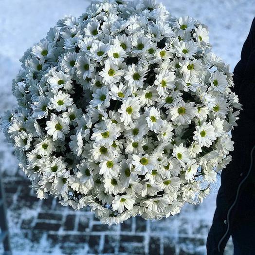 Букет 🌺  хризантем Баккарди: букеты цветов на заказ Flowwow