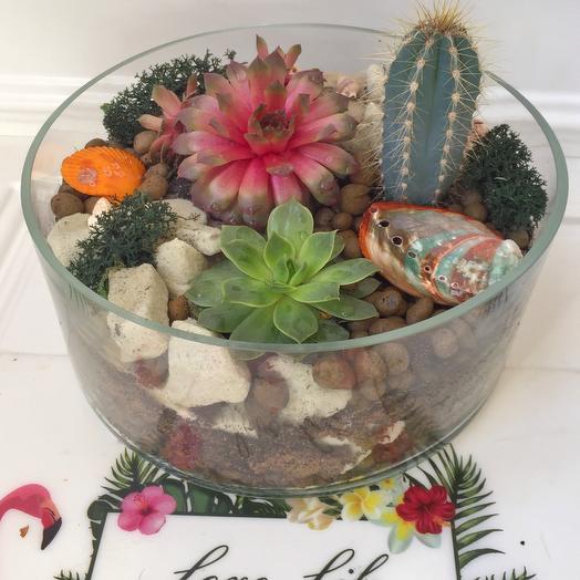 Флорариум «Красное море»: букеты цветов на заказ Flowwow